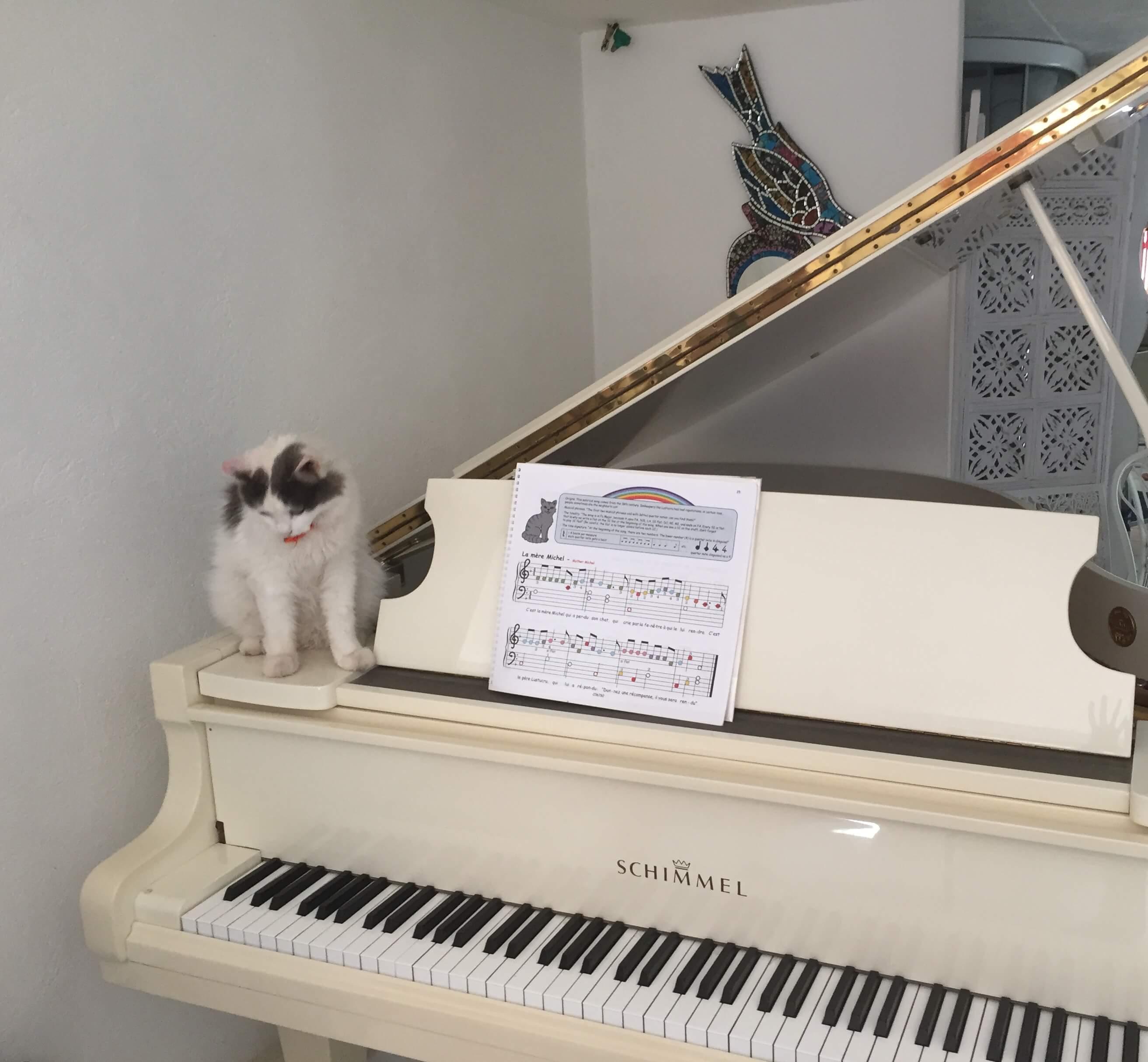 chat blanc sur une piano blanc arc en ciel
